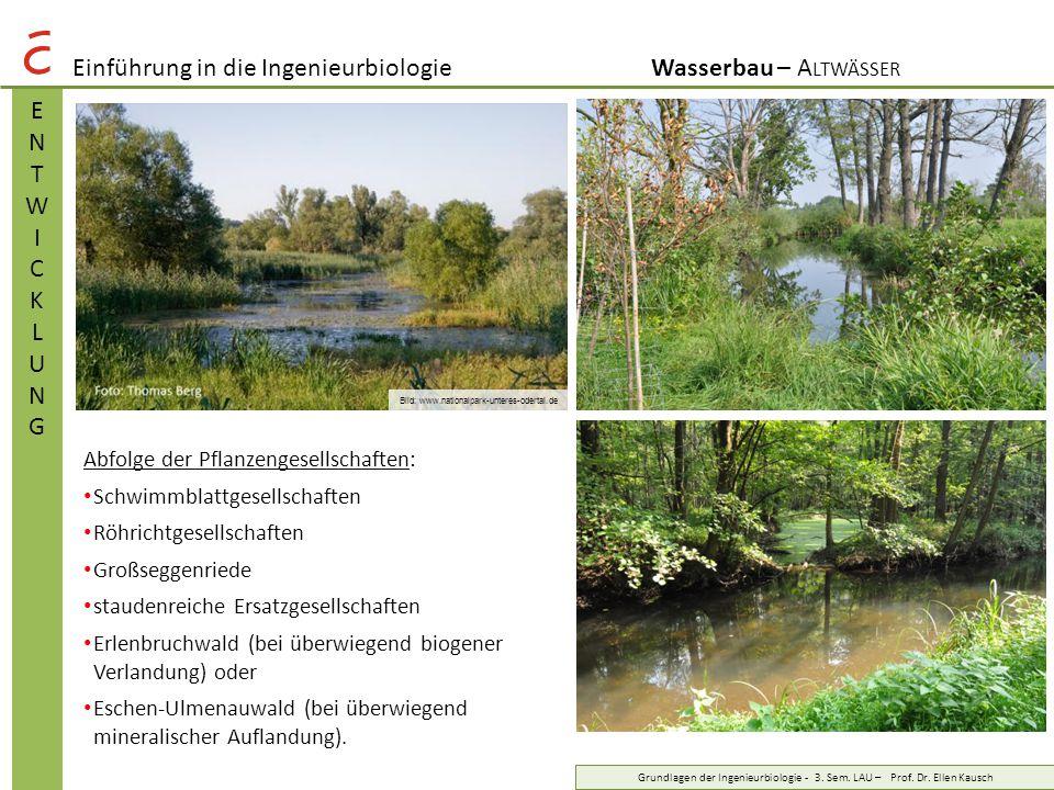 Einführung in die IngenieurbiologieWasserbau – A LTWÄSSER BEDEUTUNGBEDEUTUNG Grundlagen der Ingenieurbiologie - 3.