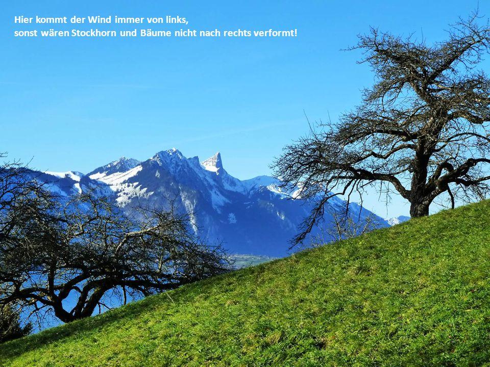 Hier kommt der Wind immer von links, sonst wären Stockhorn und Bäume nicht nach rechts verformt!