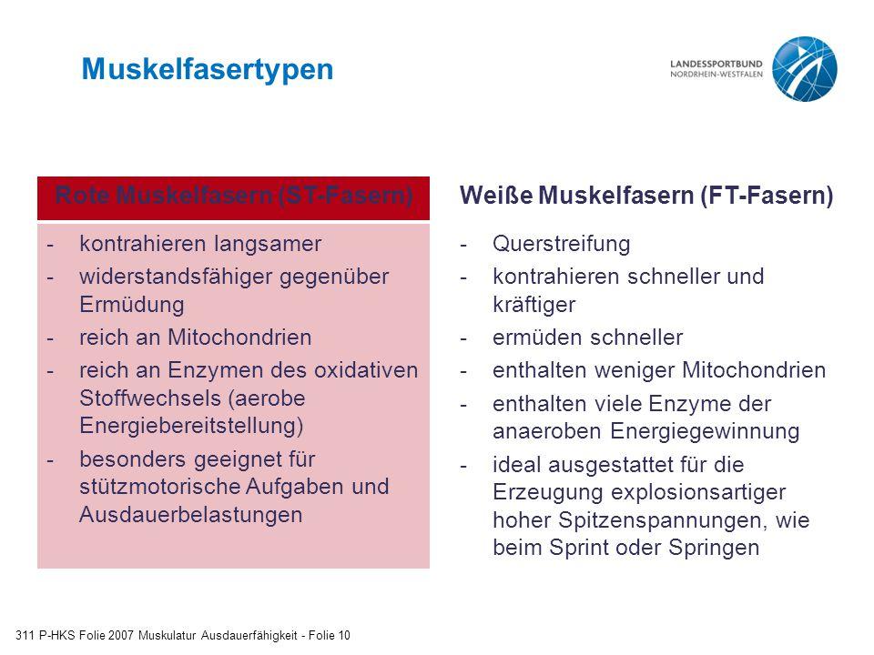 Muskelfasertypen 311 P-HKS Folie 2007 Muskulatur Ausdauerfähigkeit - Folie 10 -kontrahieren langsamer -widerstandsfähiger gegenüber Ermüdung -reich an Mitochondrien -reich an Enzymen des oxidativen Stoffwechsels (aerobe Energiebereitstellung) -besonders geeignet für stützmotorische Aufgaben und Ausdauerbelastungen Rote Muskelfasern (ST-Fasern)Weiße Muskelfasern (FT-Fasern) -Querstreifung -kontrahieren schneller und kräftiger -ermüden schneller -enthalten weniger Mitochondrien -enthalten viele Enzyme der anaeroben Energiegewinnung -ideal ausgestattet für die Erzeugung explosionsartiger hoher Spitzenspannungen, wie beim Sprint oder Springen