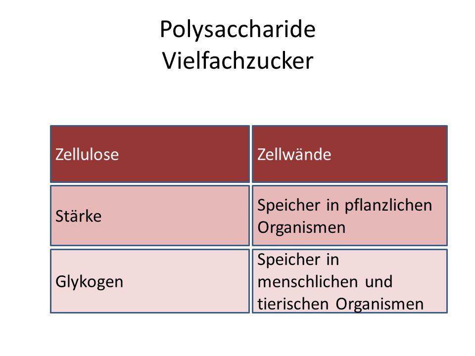 Polysaccharide Vielfachzucker Zellulose Stärke Glykogen Zellwände Speicher in pflanzlichen Organismen Speicher in menschlichen und tierischen Organism