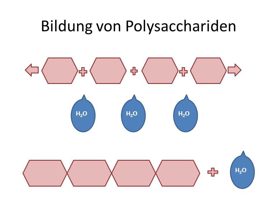 Bildung von Polysacchariden H2OH2OH2OH2OH2OH2O H2OH2O