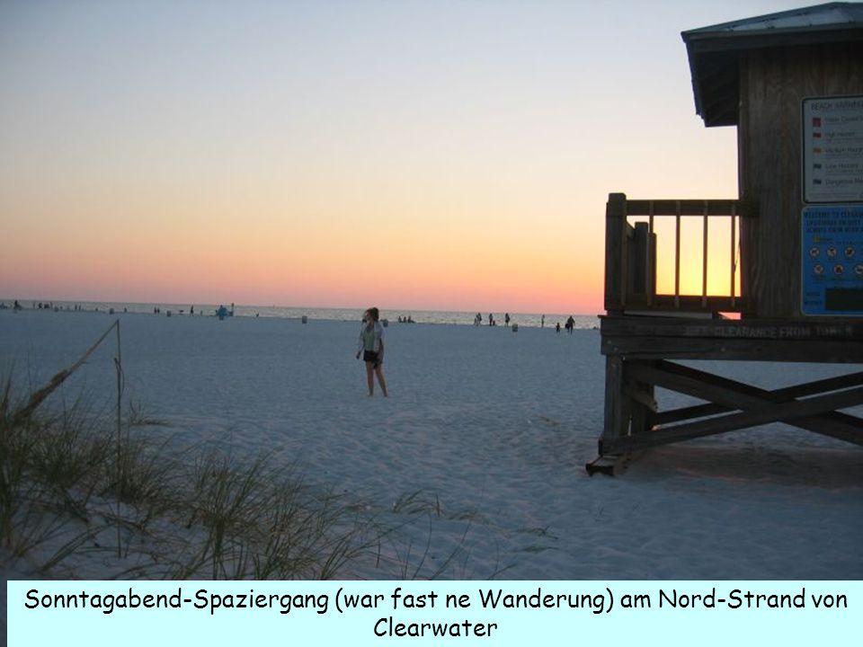 Sonntagabend-Spaziergang (war fast ne Wanderung) am Nord-Strand von Clearwater