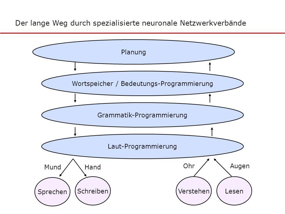 Wortspeicher / Bedeutungs-Programmierung Sprechen MundHand OhrAugen Planung Grammatik-Programmierung Laut-Programmierung SchreibenVerstehenLesen Der l