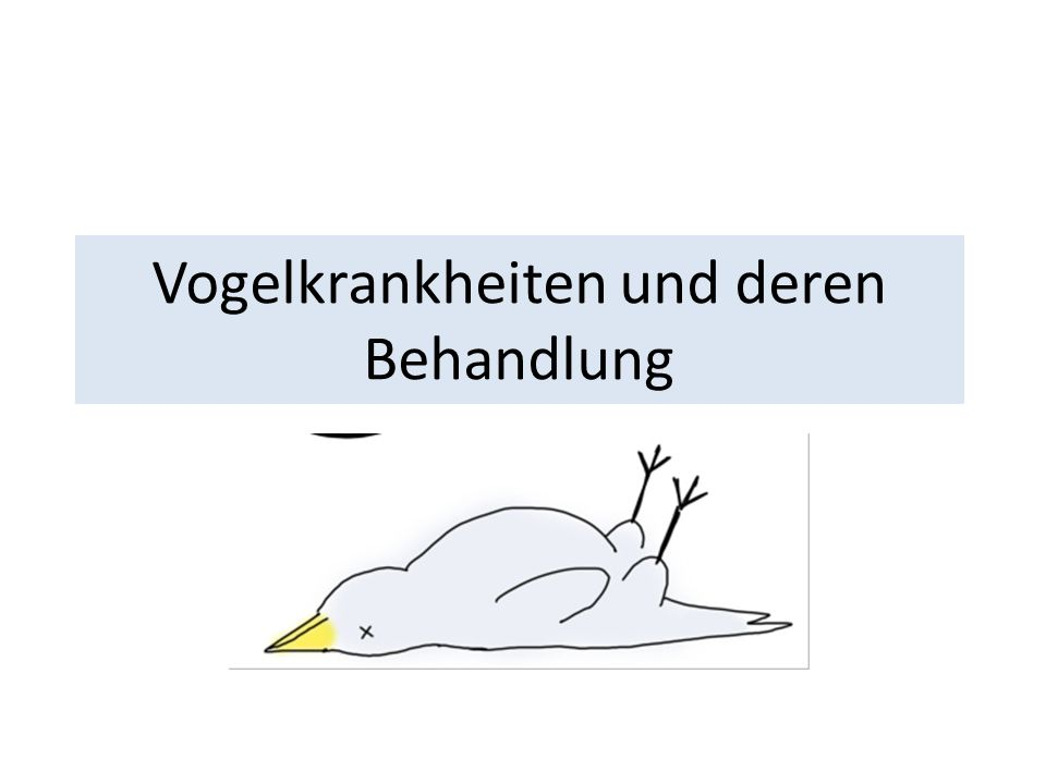 Der kranke Vogel Gesträubtes Gefieder Schlafen am Tag Wässriger oder grüner Kot (Körnerfresser) Wippen beim koten Schnappatmung, japsen Sekrete Haut- und Federveränderungen Abmagerung (Brustbein)