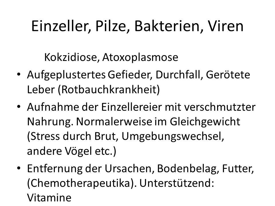 Einzeller, Pilze, Bakterien, Viren Kokzidiose, Atoxoplasmose Aufgeplustertes Gefieder, Durchfall, Gerötete Leber (Rotbauchkrankheit) Aufnahme der Einz
