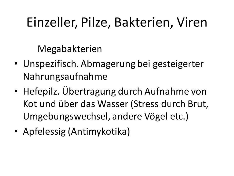 Einzeller, Pilze, Bakterien, Viren Megabakterien Unspezifisch.