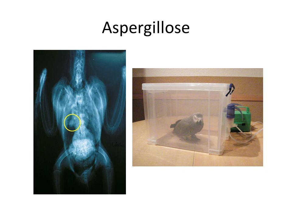 Aspergillose