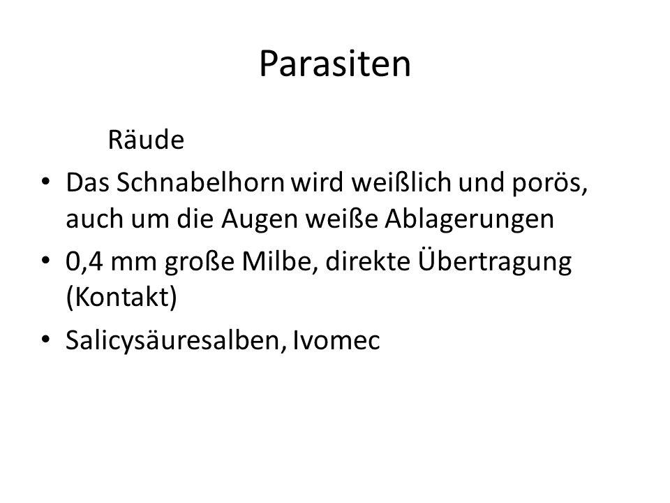 Parasiten Räude Das Schnabelhorn wird weißlich und porös, auch um die Augen weiße Ablagerungen 0,4 mm große Milbe, direkte Übertragung (Kontakt) Salicysäuresalben, Ivomec