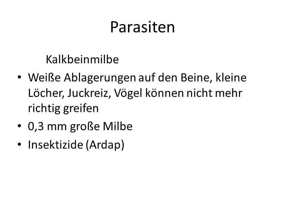 Parasiten Kalkbeinmilbe Weiße Ablagerungen auf den Beine, kleine Löcher, Juckreiz, Vögel können nicht mehr richtig greifen 0,3 mm große Milbe Insektizide (Ardap)