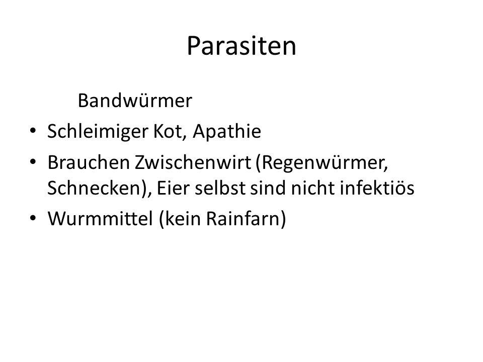 Parasiten Bandwürmer Schleimiger Kot, Apathie Brauchen Zwischenwirt (Regenwürmer, Schnecken), Eier selbst sind nicht infektiös Wurmmittel (kein Rainfarn)