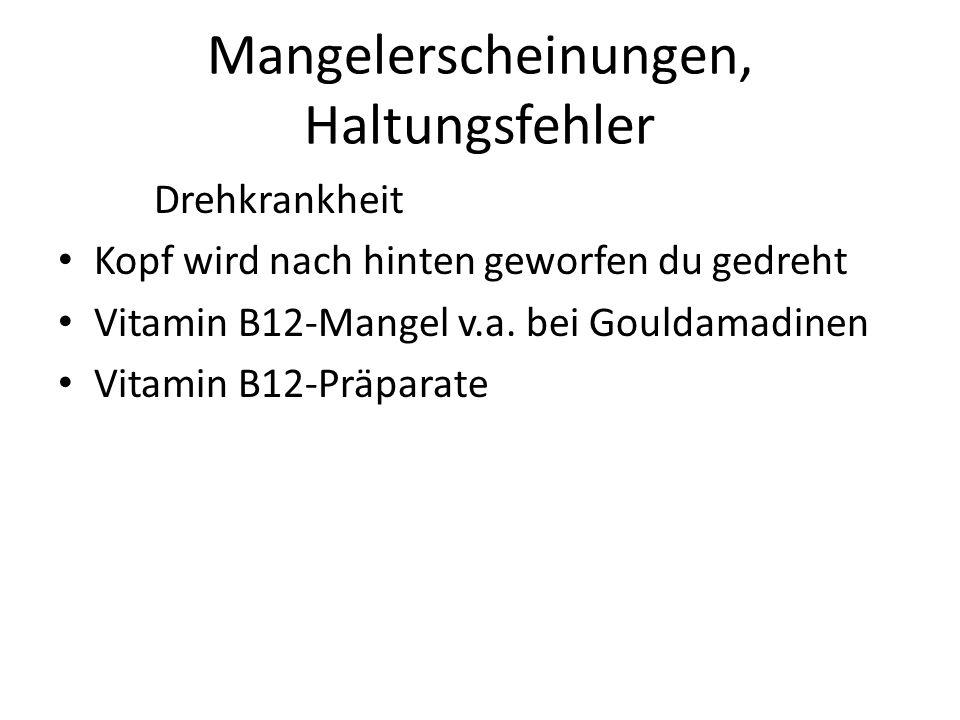 Mangelerscheinungen, Haltungsfehler Drehkrankheit Kopf wird nach hinten geworfen du gedreht Vitamin B12-Mangel v.a. bei Gouldamadinen Vitamin B12-Präp