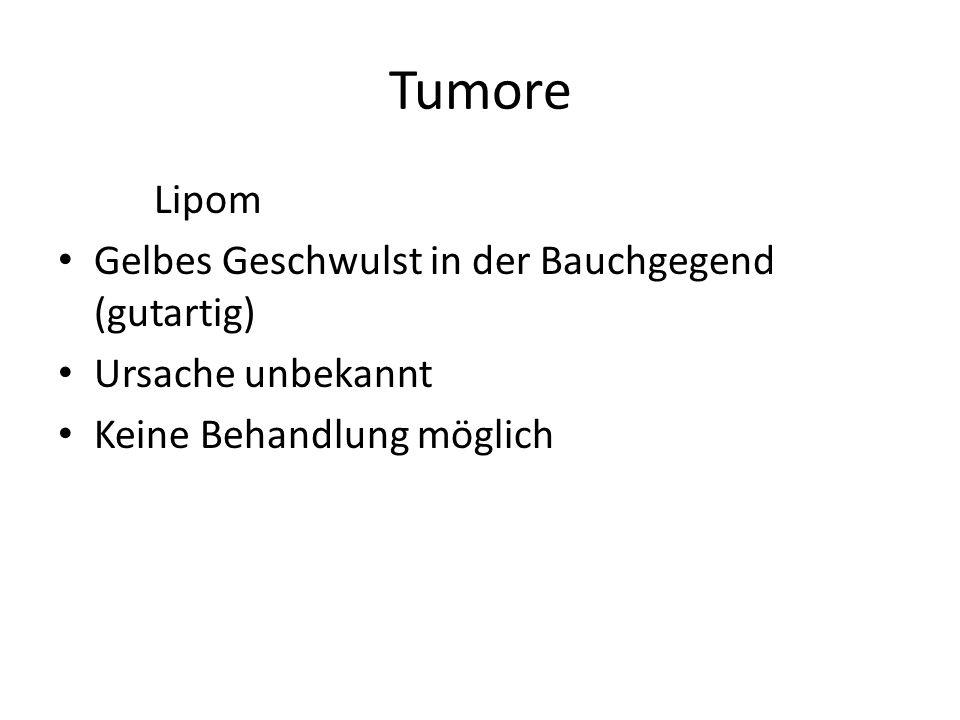 Tumore Lipom Gelbes Geschwulst in der Bauchgegend (gutartig) Ursache unbekannt Keine Behandlung möglich