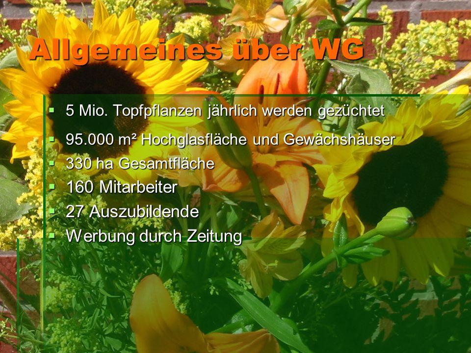 Allgemeines über WG  5 Mio. Topfpflanzen jährlich werden gezüchtet  95.000 m² Hochglasfläche und Gewächshäuser  330 ha Gesamtfläche  160 Mitarbeit