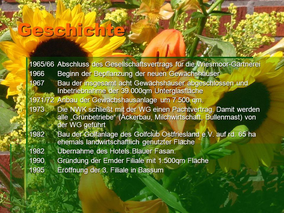 Geschichte 1965/66Abschluss des Gesellschaftsvertrags für die Wiesmoor-Gärtnerei 1966Beginn der Bepflanzung der neuen Gewächshäuser 1967Bau der insges