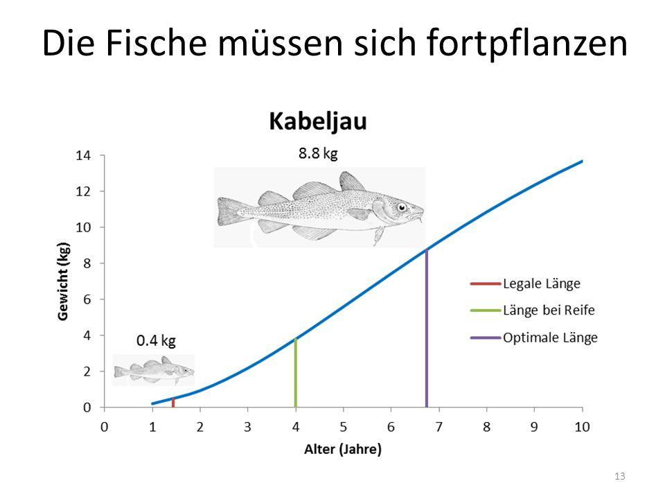 Die Fische müssen sich fortpflanzen 13