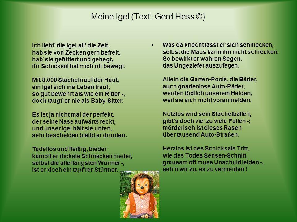 bitte klicken! Text: Gerhard Hess © hme12@t-online.de