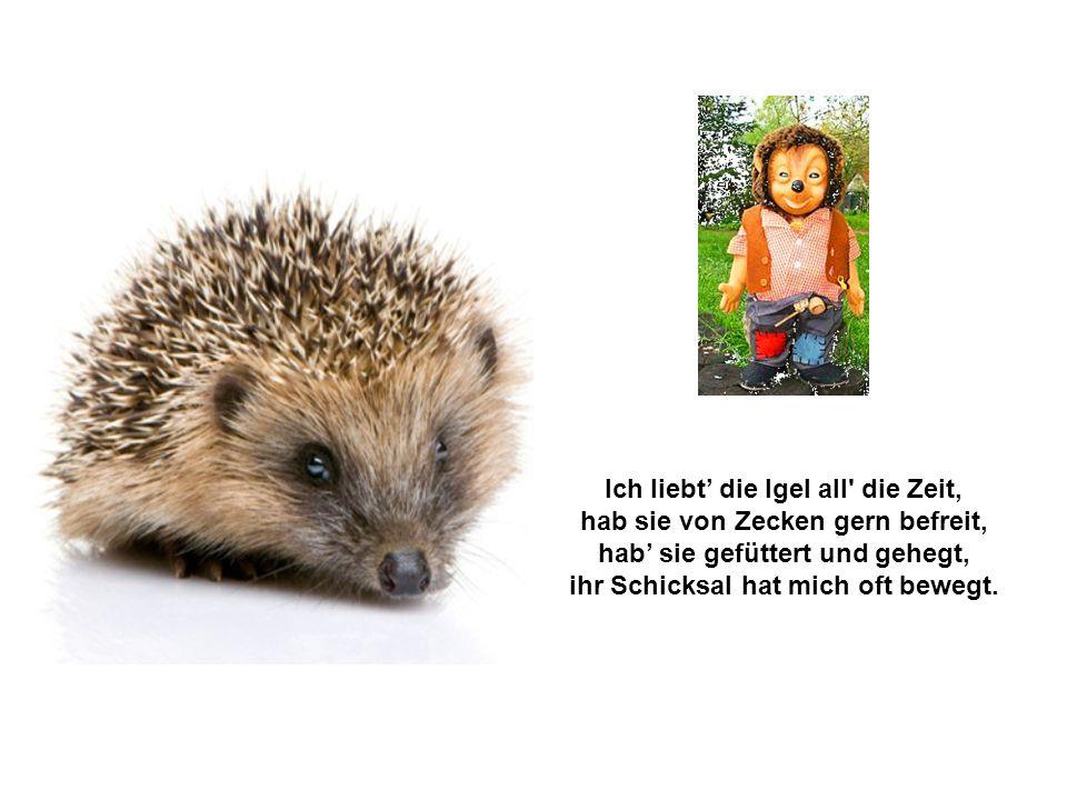Meine Igel (Text: Gerd Hess ©) Was da kriecht lässt er sich schmecken, selbst die Maus kann ihn nicht schrecken. So bewirkt er wahren Segen, das Ungez