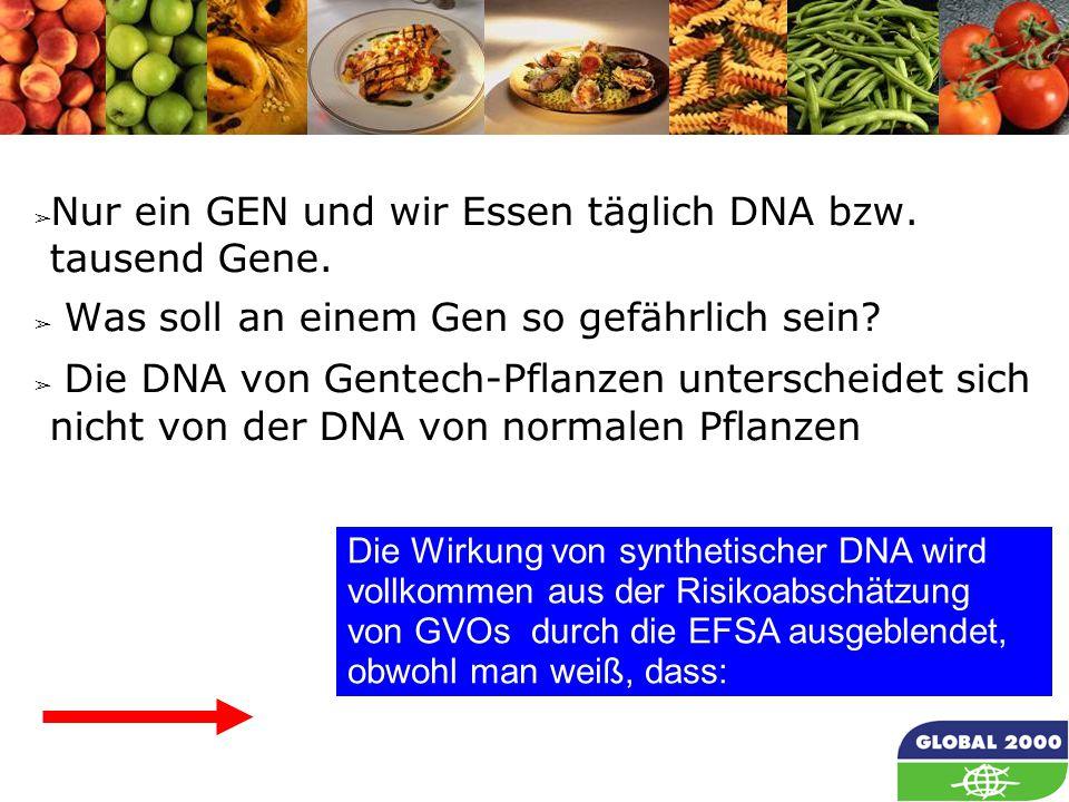 26 Die Wirkung von synthetischer DNA wird vollkommen aus der Risikoabschätzung von GVOs durch die EFSA ausgeblendet, obwohl man weiß, dass: ➢ Nur ein GEN und wir Essen täglich DNA bzw.