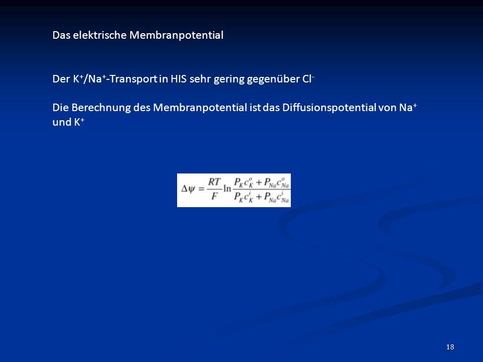 18 Das elektrische Membranpotential Der K + /Na + -Transport in HIS sehr gering gegenüber Cl - Die Berechnung des Membranpotential ist das Diffusionsp