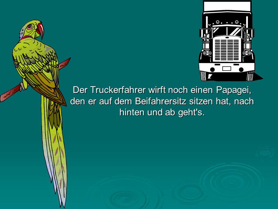 Der Truckerfahrer wirft noch einen Papagei, den er auf dem Beifahrersitz sitzen hat, nach hinten und ab geht s.