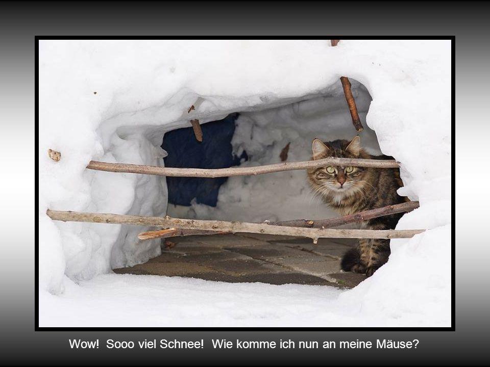 Es ist Winter! Eis und Schnee gehören dazu: Eine etwas anderen Sicht!