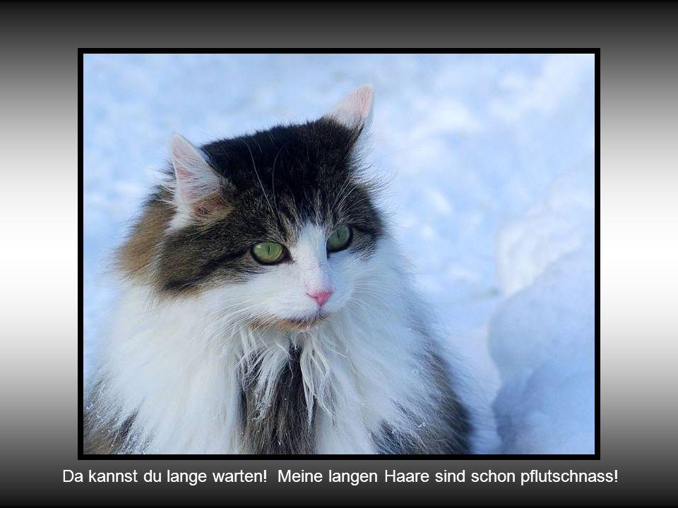 Wow! Sooo viel Schnee! Wie komme ich nun an meine Mäuse