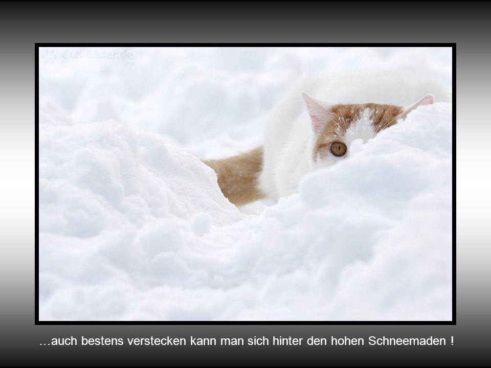 … und es lässt sich so wunderbar spielen im Schnee … grrrr, grrr,grrr …