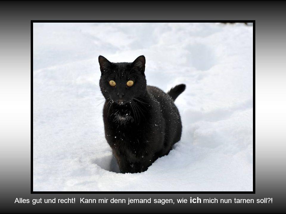 …auch bestens verstecken kann man sich hinter den hohen Schneemaden !