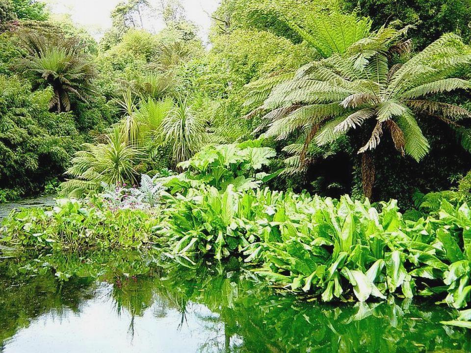 The Lost Gardens of Heligan The Lost Gardens of Heligan ist einer der bekanntesten Gärten in England.