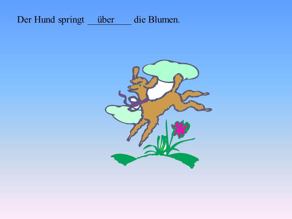 Der Hund springt _________ die Blumen.über