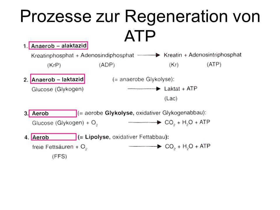 Prozesse zur Regeneration von ATP