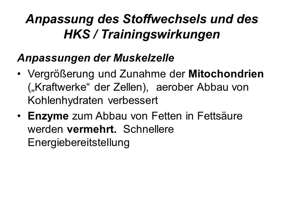 """Anpassung des Stoffwechsels und des HKS / Trainingswirkungen Anpassungen der Muskelzelle Vergrößerung und Zunahme der Mitochondrien (""""Kraftwerke"""" der"""