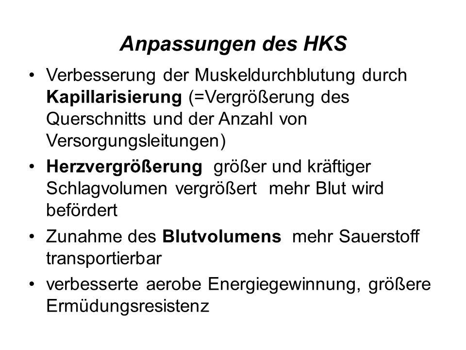 Anpassungen des HKS Verbesserung der Muskeldurchblutung durch Kapillarisierung (=Vergrößerung des Querschnitts und der Anzahl von Versorgungsleitungen
