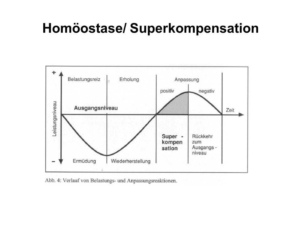Homöostase/ Superkompensation