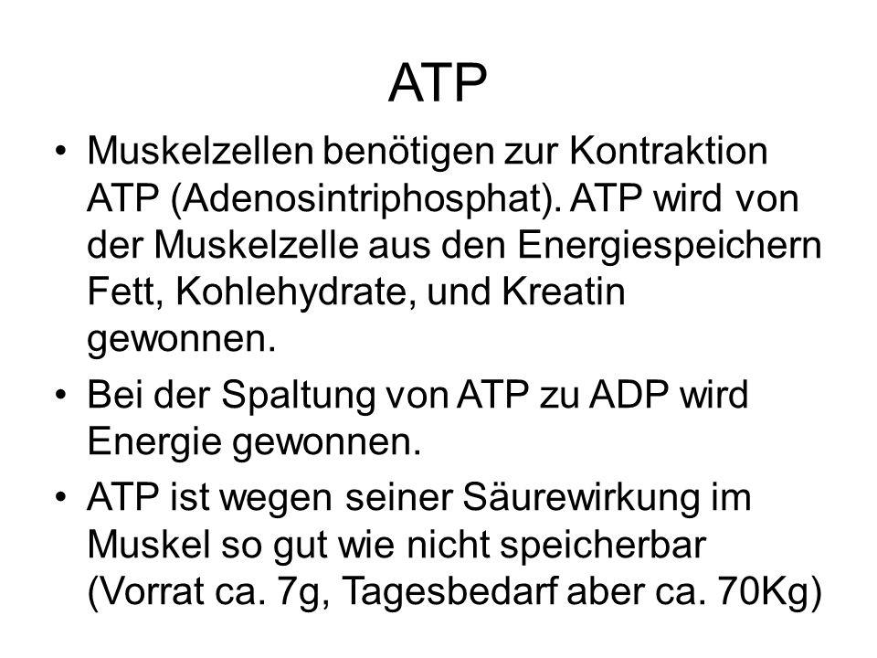 ATP Muskelzellen benötigen zur Kontraktion ATP (Adenosintriphosphat). ATP wird von der Muskelzelle aus den Energiespeichern Fett, Kohlehydrate, und Kr