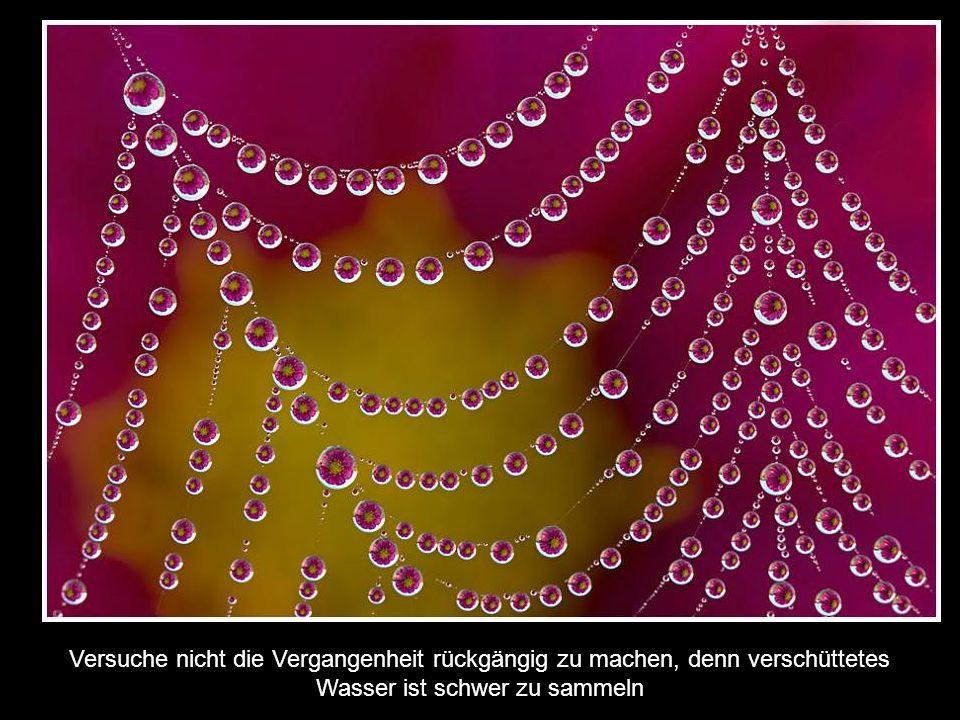 Versuche nie die Gefühle eines anderen zu verletzen, denn Gefühle sind aus Glas! Wenn Sie zerbrechen, zerschneiden Sie die Seele...