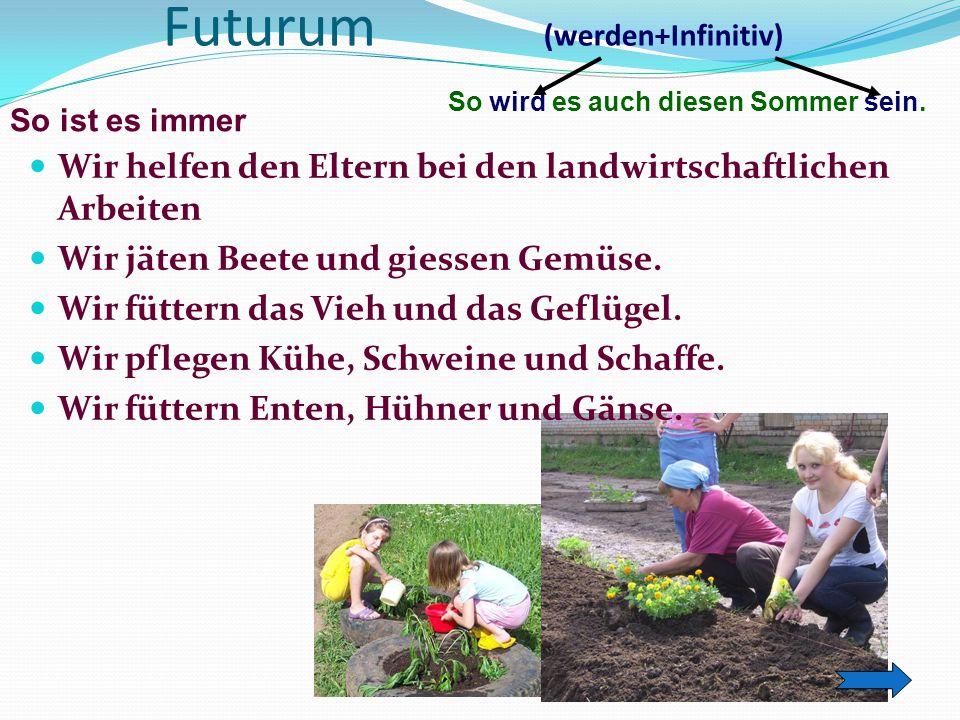 Futurum (werden+Infinitiv) Wir helfen den Eltern bei den landwirtschaftlichen Arbeiten Wir jäten Beete und giessen Gemüse. Wir füttern das Vieh und da