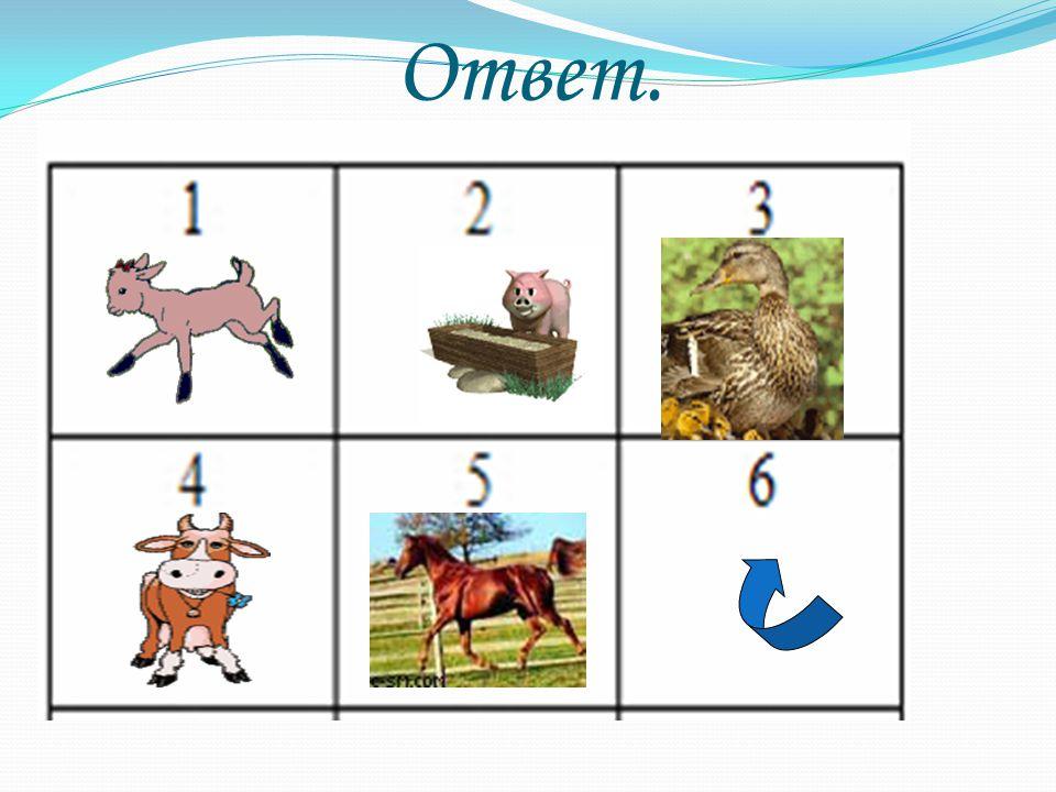№1 Im Dorf wohnen und arbeiten ein Tierarzt, ein Pferdejunge, eine Reitlehrer.