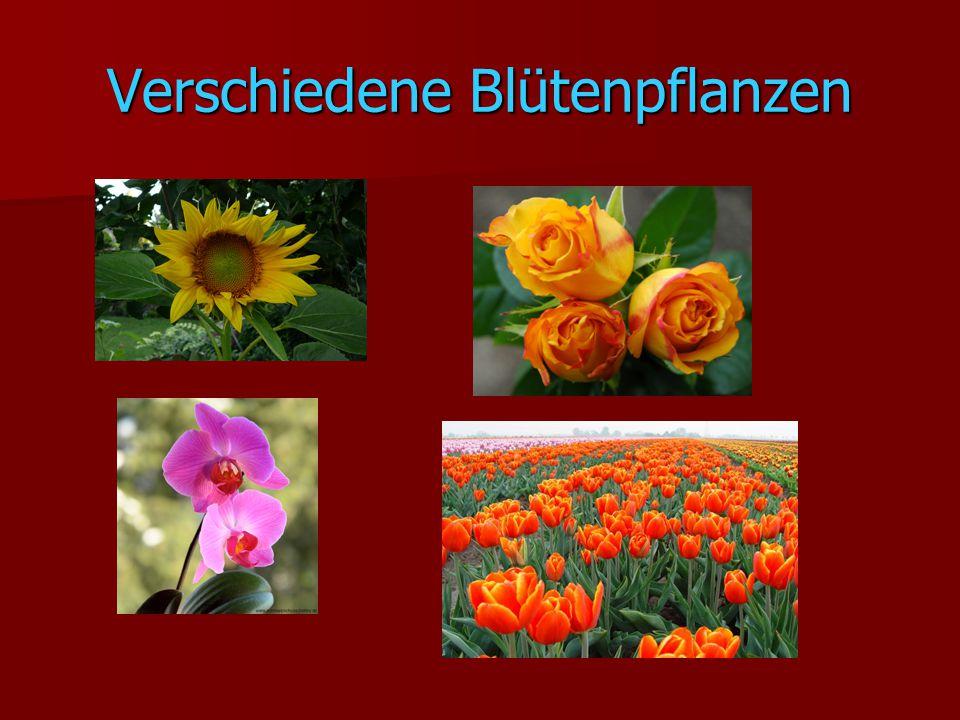 Verschiedene Blütenpflanzen