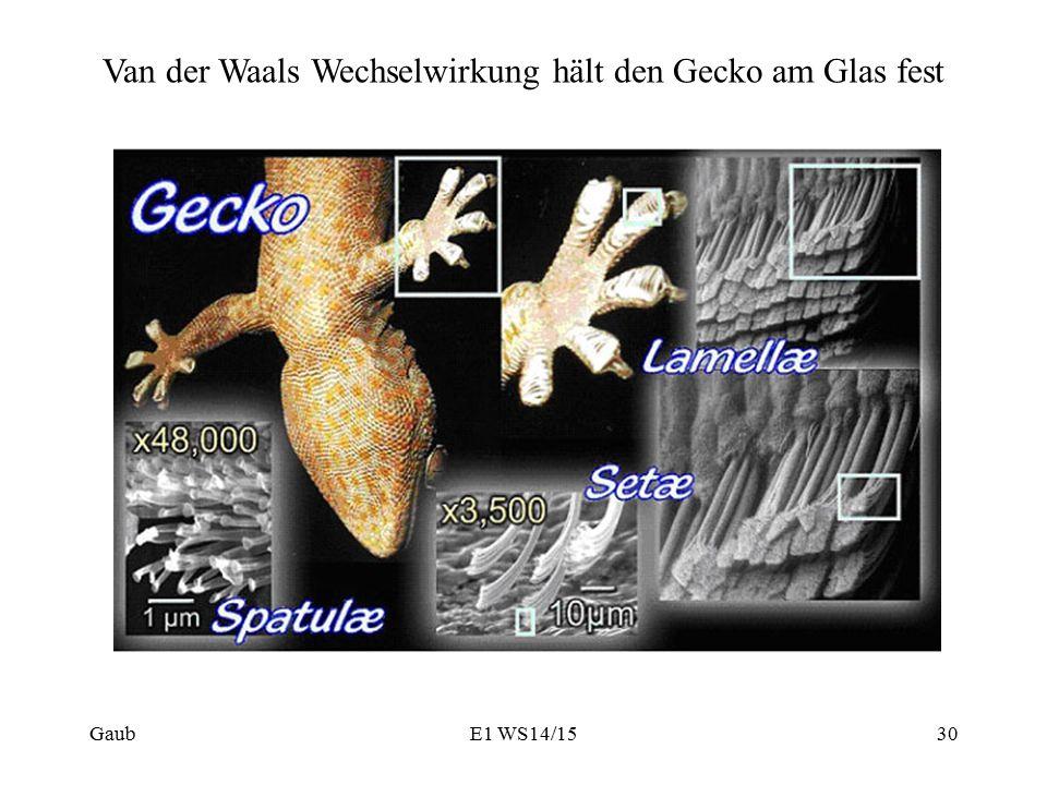 GaubE1 WS14/1530 Van der Waals Wechselwirkung hält den Gecko am Glas fest
