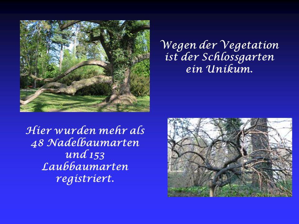 Wegen der Vegetation ist der Schlossgarten ein Unikum. Hier wurden mehr als 48 Nadelbaumarten und 153 Laubbaumarten registriert.