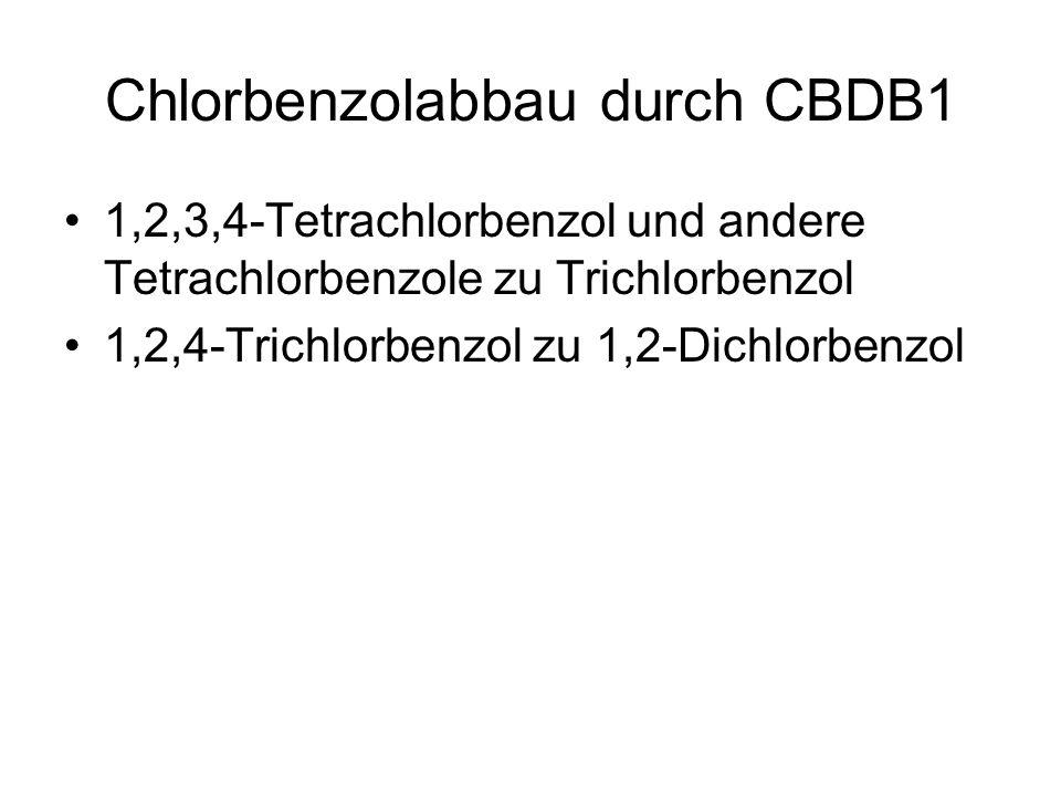 Chlorbenzolabbau durch CBDB1 1,2,3,4-Tetrachlorbenzol und andere Tetrachlorbenzole zu Trichlorbenzol 1,2,4-Trichlorbenzol zu 1,2-Dichlorbenzol