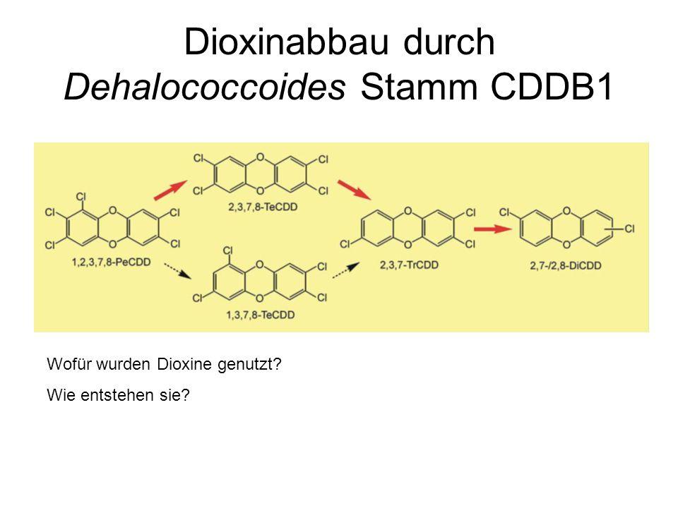 Dioxinabbau durch Dehalococcoides Stamm CDDB1 Wofür wurden Dioxine genutzt? Wie entstehen sie?