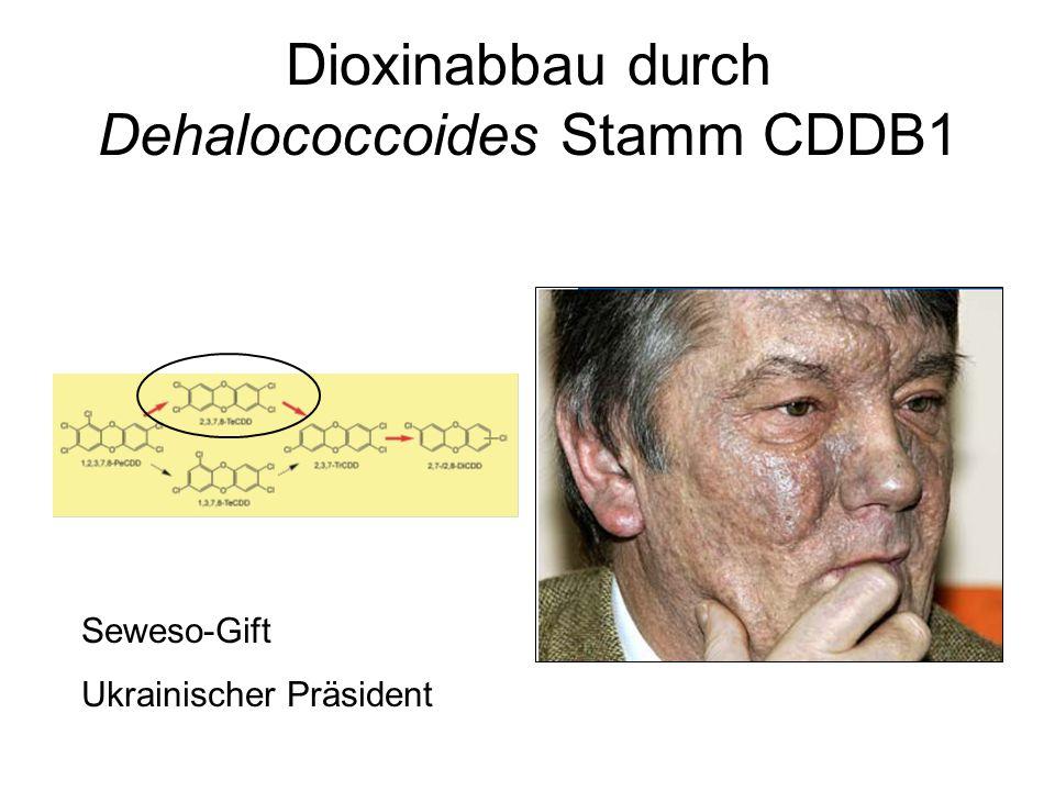 Dioxinabbau durch Dehalococcoides Stamm CDDB1 Seweso-Gift Ukrainischer Präsident