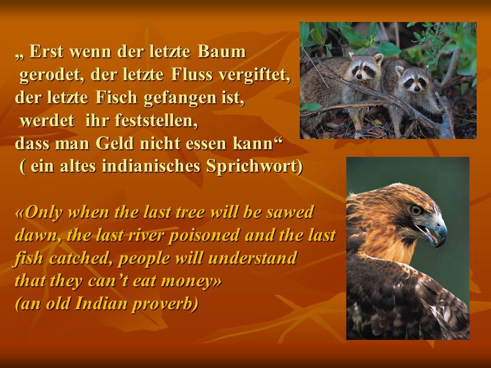 """"""" Erst wenn der letzte Baum gerodet, der letzte Fluss vergiftet, der letzte Fisch gefangen ist, werdet ihr feststellen, dass man Geld nicht essen kann"""