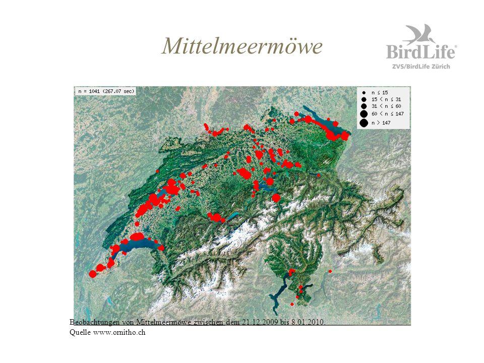 Beobachtungen von Mittelmeermöwe zwischen dem 21.12.2009 bis 8.01.2010. Quelle www.ornitho.ch