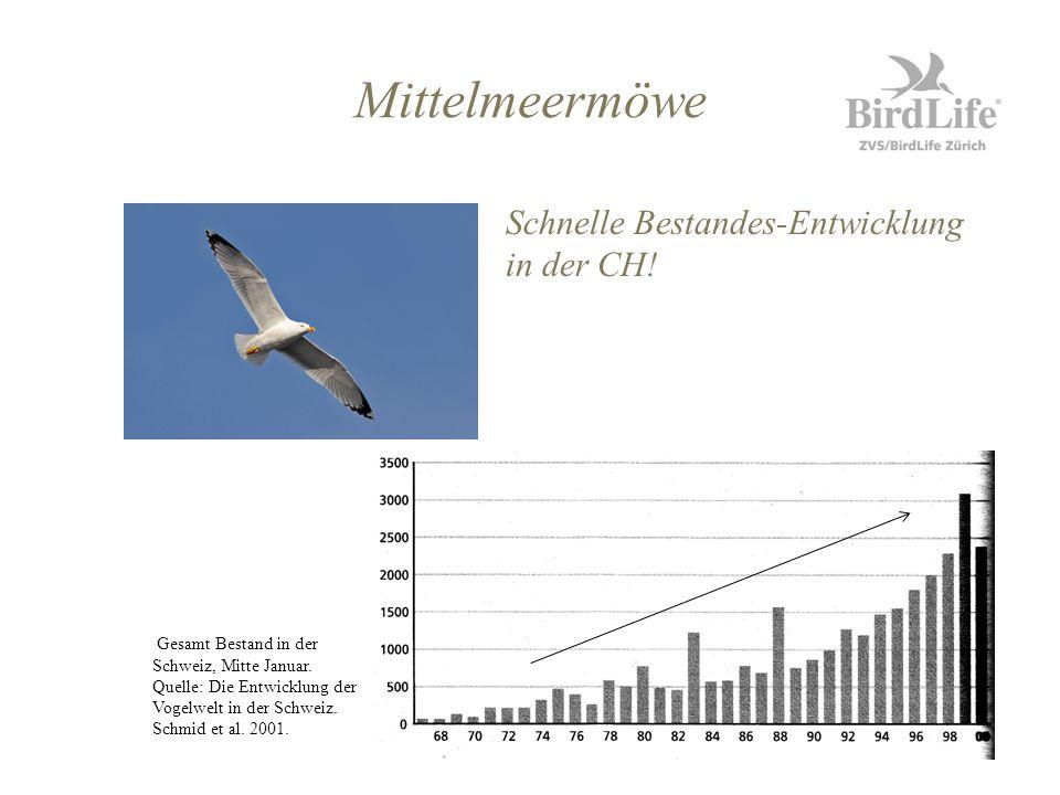 Schnelle Bestandes-Entwicklung in der CH! Gesamt Bestand in der Schweiz, Mitte Januar. Quelle: Die Entwicklung der Vogelwelt in der Schweiz. Schmid et