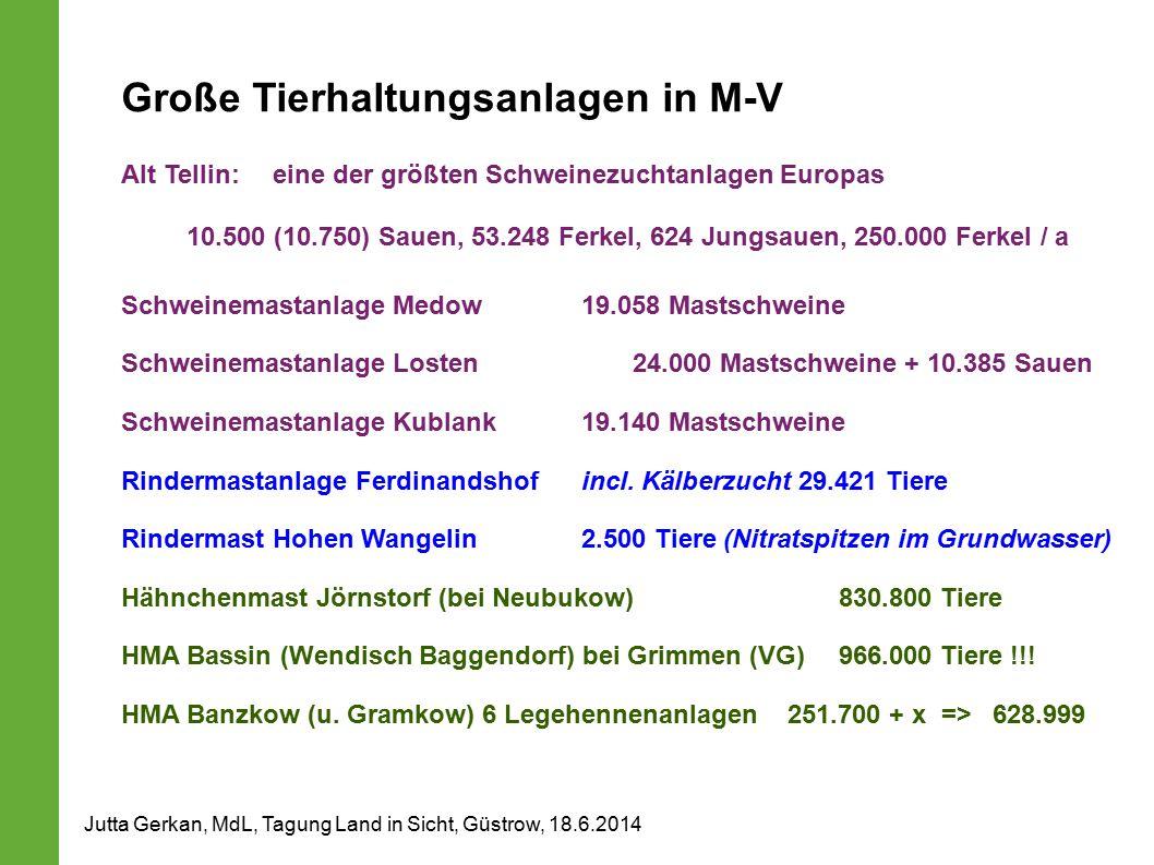 Große Tierhaltungsanlagen in M-V Alt Tellin:eine der größten Schweinezuchtanlagen Europas 10.500 (10.750) Sauen, 53.248 Ferkel, 624 Jungsauen, 250.000