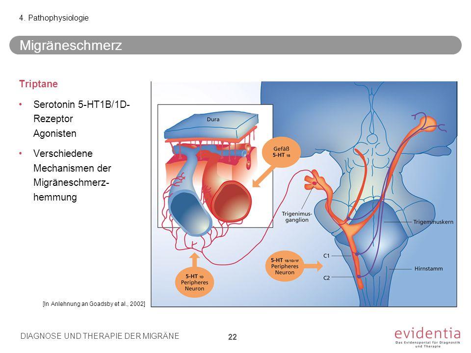 Migräneschmerz Triptane Serotonin 5-HT1B/1D- Rezeptor Agonisten Verschiedene Mechanismen der Migräneschmerz- hemmung 4. Pathophysiologie [In Anlehnung