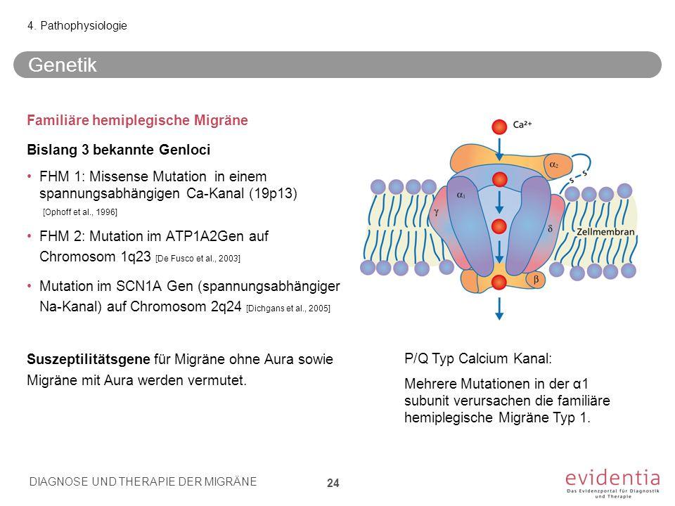 Genetik Familiäre hemiplegische Migräne Bislang 3 bekannte Genloci FHM 1: Missense Mutation in einem spannungsabhängigen Ca-Kanal (19p13) [Ophoff et a